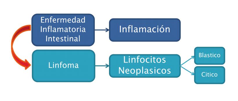 linfoma-alimentario-felino