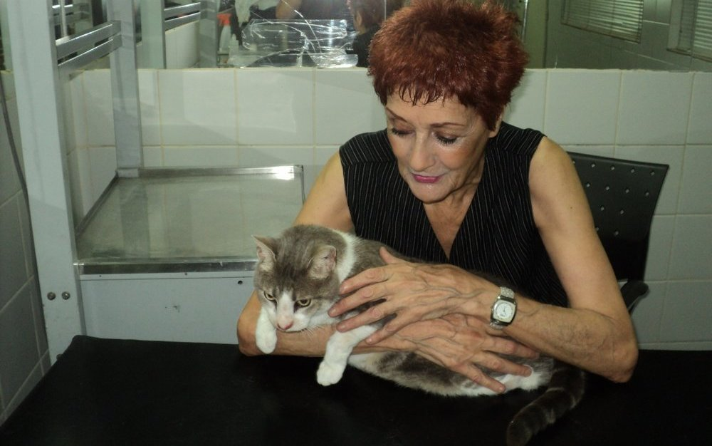 comparacion-edades-perros-gatos-humanos