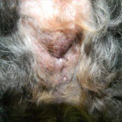 Foto 1 electroquimioterapia